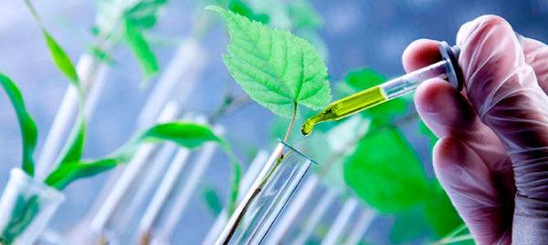 Murcia, tercera provincia en crecimiento laboral en biotecnología